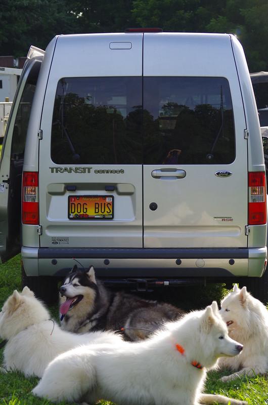 Meet Us At the Dog Bus!