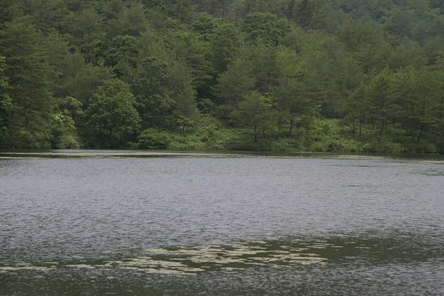豊かな水が湿原をつくりだす.