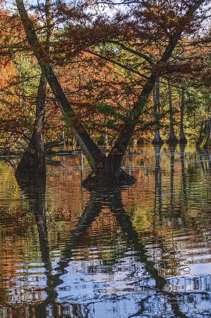 Mingo National Wildlife Refuge, in Puxico, Missouri, USA - trees and reflections, big X