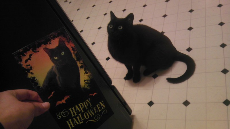 HAPPY HALLOWEEN: best card ever<3 meow