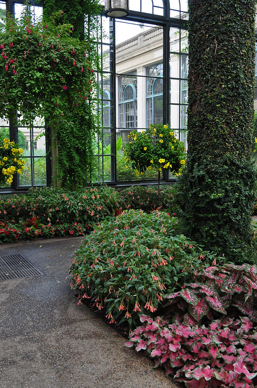 Conservatory - Orangery (4)