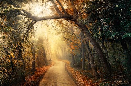 road autumn trees light nature leaves fog forest rays