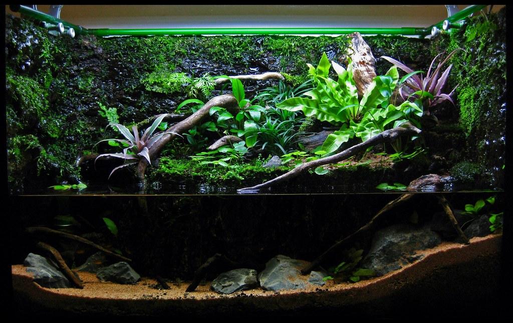 15g paludarium the planted tank forum for Aquarium ouvert