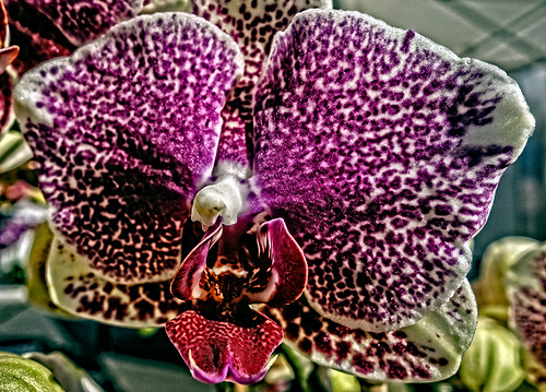 Orchid at Farmer's Market by joeeisner