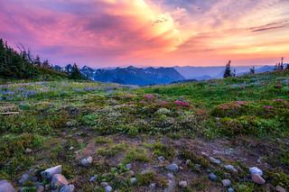 Sunset with Mt Rainier Wildflowers by Michael Matti