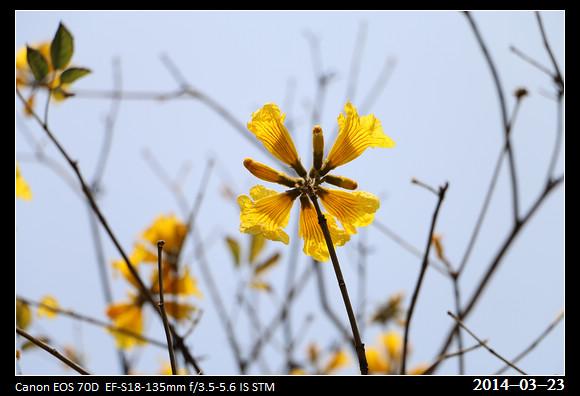 11_20140323_Yellow4