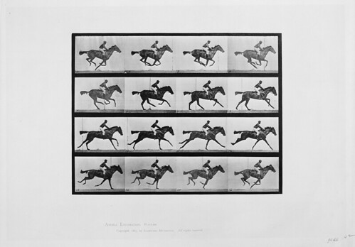 "[Animal locomotion - 16 frames of racehorse ""Annie G."" galloping] (LOC)"