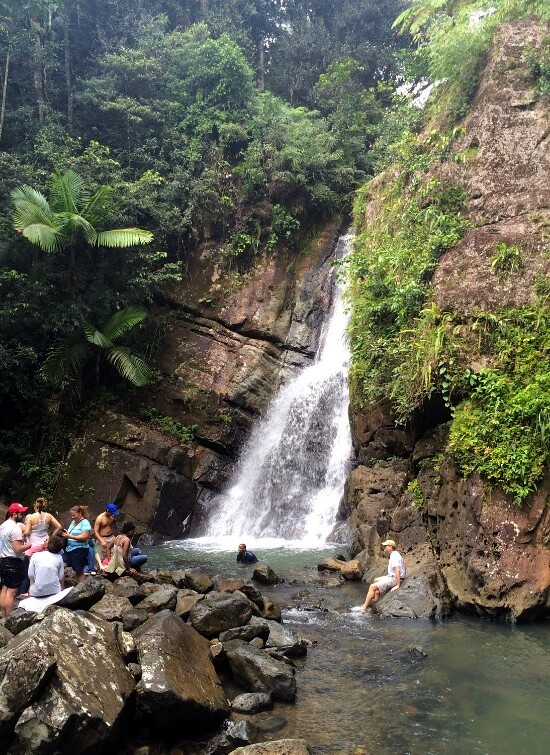 Hi Sugarplum | El Yunque National Forest