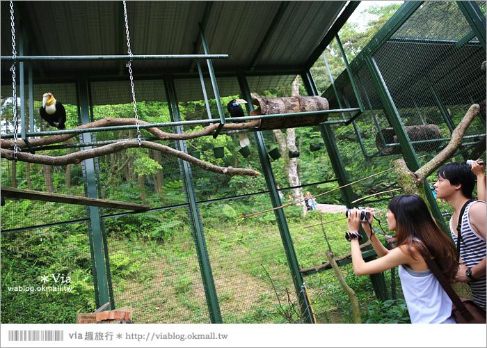 【新竹景點推薦】森林鳥花園~親子旅遊的好去處!在森林裡鳥兒與孩子們的樂園49