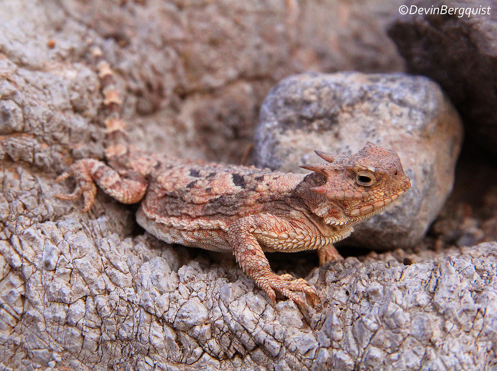 Field Herp Forum • View topic - 2014 - The Southwest (CA ...