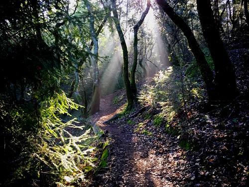 sun mountain bike forest ray ride beam tamarancho