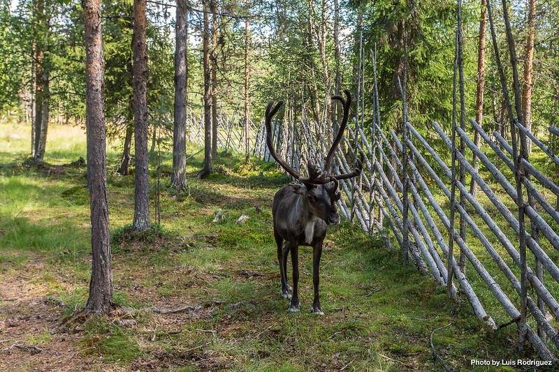 Sami Center Laponia Sueca-13