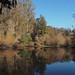 Great Egret, Jewel Lake, Tilden
