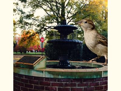 Birdie's Water Fountain Exaggeration