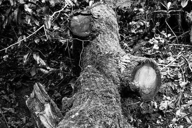 Fallen tree with branches cut off - a photo on Flickriver