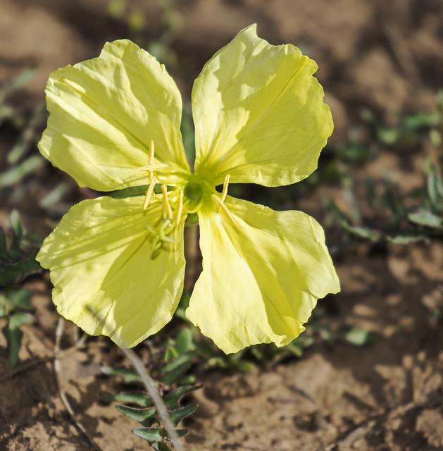 Flower 1-7D2-110516