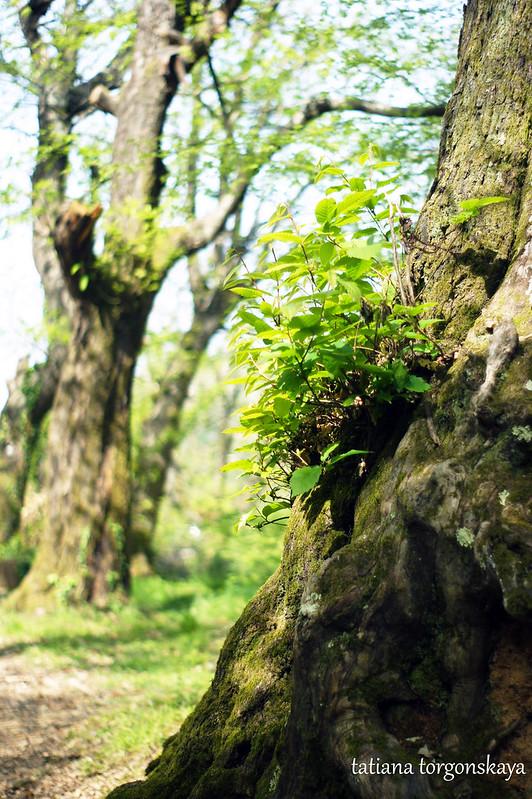 Фрагмент дерева