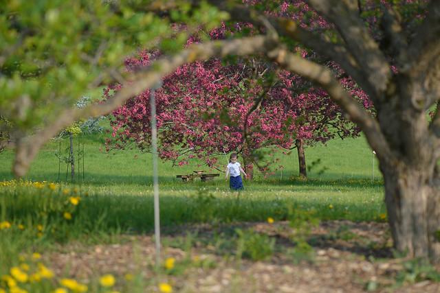CrabApple Arboretum-25