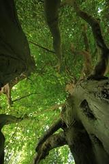 Im Baum (2)
