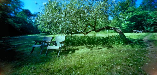 pinhole appletree estenopeica stenope ondu nolens pinholetree