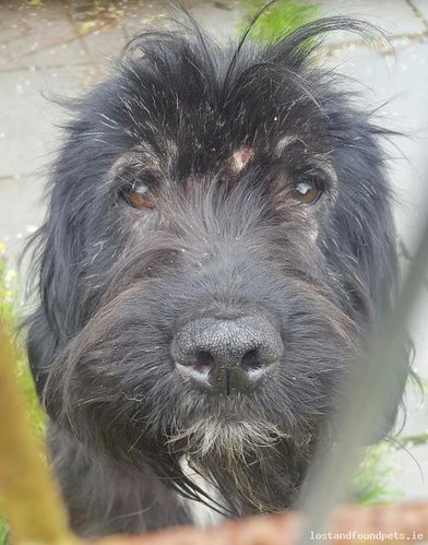 Mon, Jun 20th, 2016 Found Male Dog - The Local Area, Ballyneety, Limerick