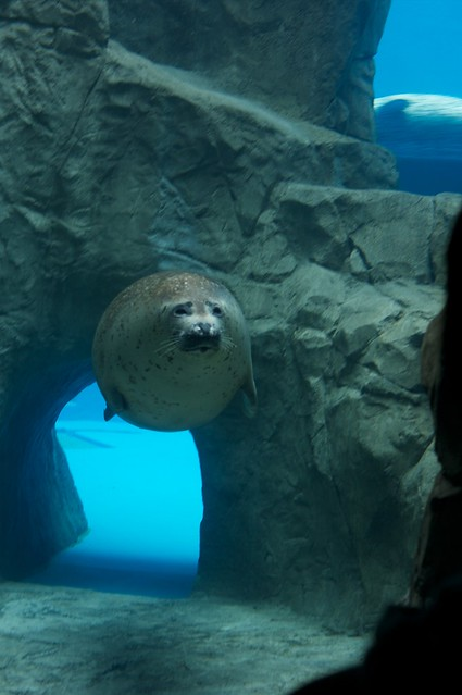 Oga aquarium 1