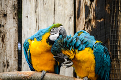 Parrots at the World of Birds