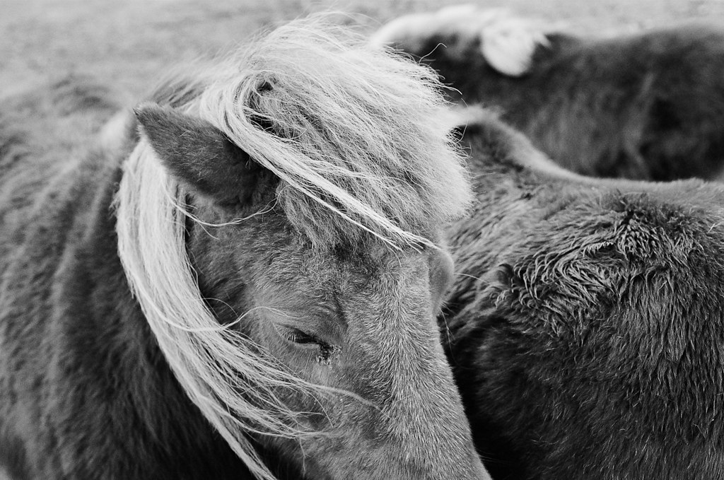 Ponies - Copyright © 2013 Marcin Michalak Photography.