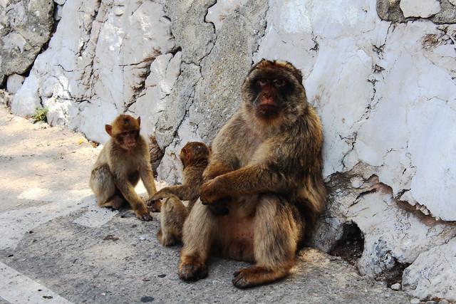 apes big