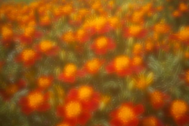 Flower bokehzz