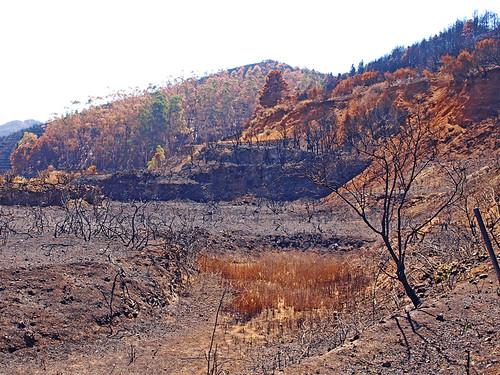 Forest Fire Damage, Erjos