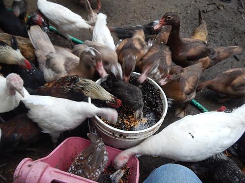 Starving birds