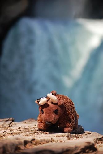 51fbdfaa1aa48-buddy bison