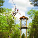 Small photo of Branson Zipline