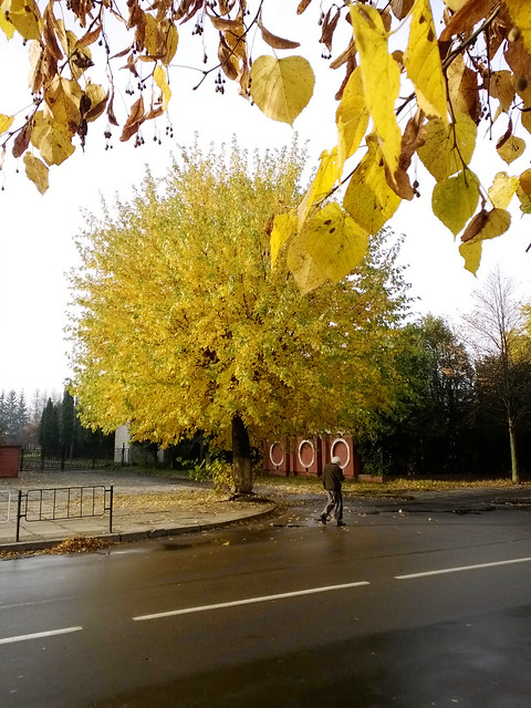 autumn tree. Lviv, Ukraine
