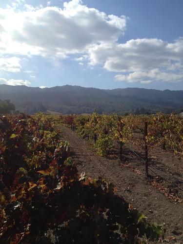 Corison Winery Cabernet Sauvignon Kronos Vineayrd