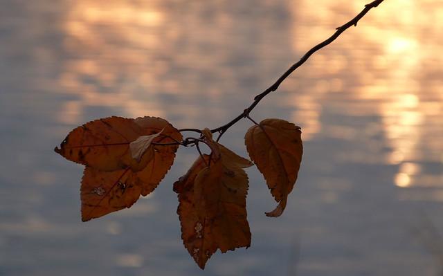 leaves_nov2013