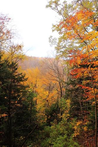 andyarthur chautauquagorgestateforest gorgeview1