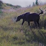 Teddy Roosevelt National Park, ND