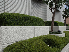 shrub, garden, wall, green, landscaping, hedge,