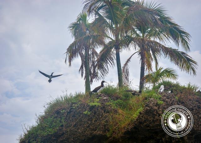 Bird Island_5