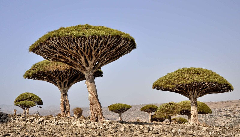 Socotra tour - dragon's blood spine