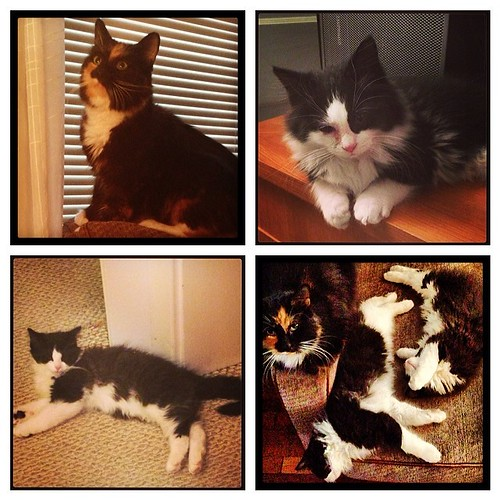 #fmsphotoaday February 22 - An act of kindness. As of tomorrow it'll be exactly one year since we rescued our three gorgeous fur beasts from a sad situation. They (especially the kittens) have grown so much since these pics were taken the day we brought t