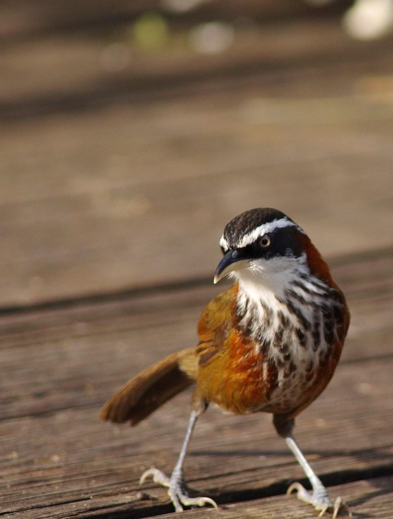 週末拍鳥選集