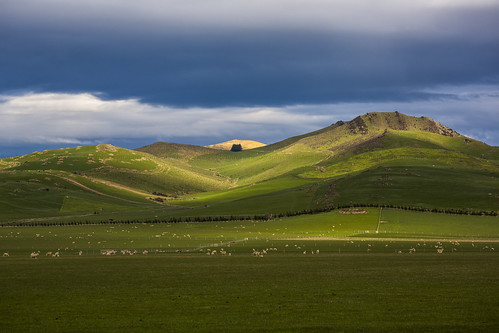 The Land Of Sheep | New Zealand by Born Amin