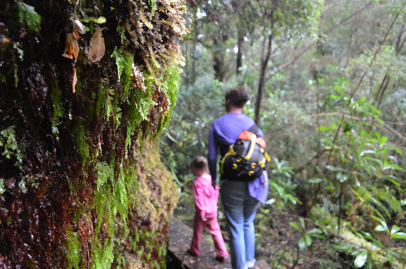 It's the minor details that are the most beautiful on Whyte River Walk - Tarkine Wilderness - Corinna - Tasmania
