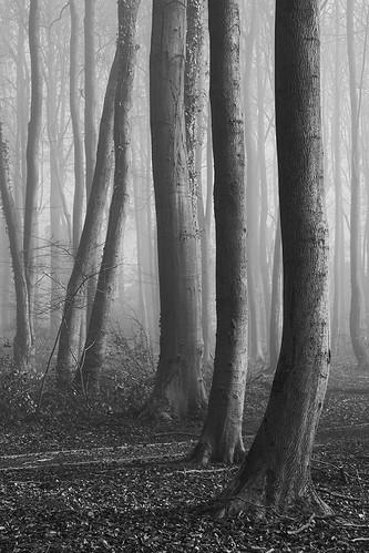 Misty Backdrop