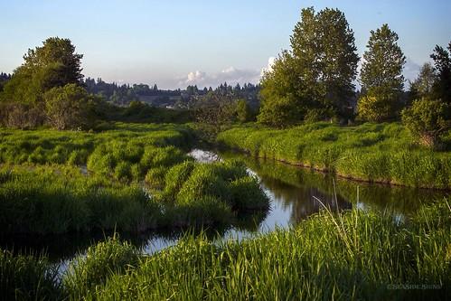 Spring Greens ~ Surrey, BC
