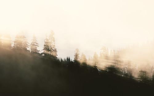 trees fog nature landscape sun pacificnorthwest snoqualmie canon pnw canonef100400mmf4556lisusm canoneos5dmarkiii washington johnwestrock