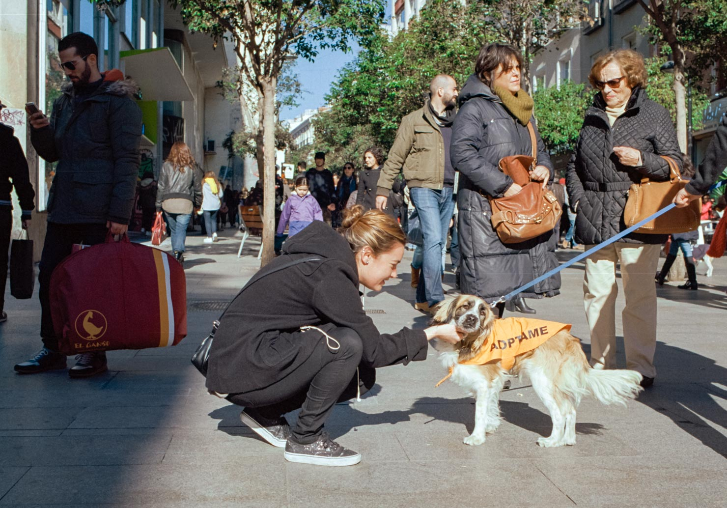 Adopt a Dog | Fuencarral, Madrid